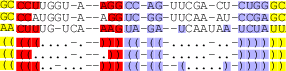 Multiple Alignment of RNAs